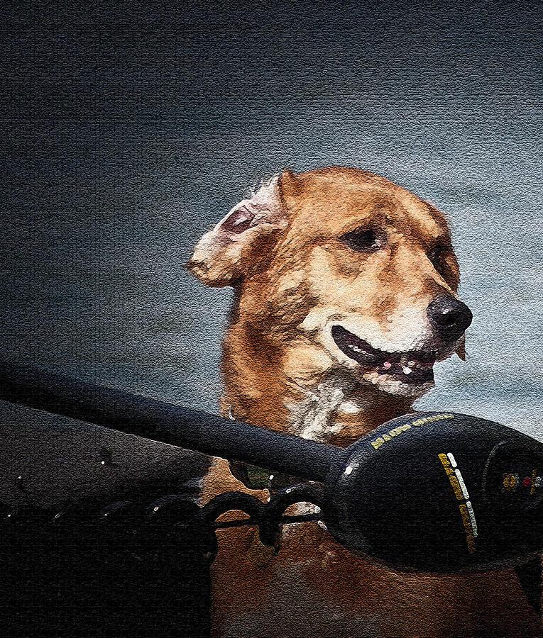 Dogs Photograph - A Portrait Of A Golden Retriever by Deborah Klubertanz