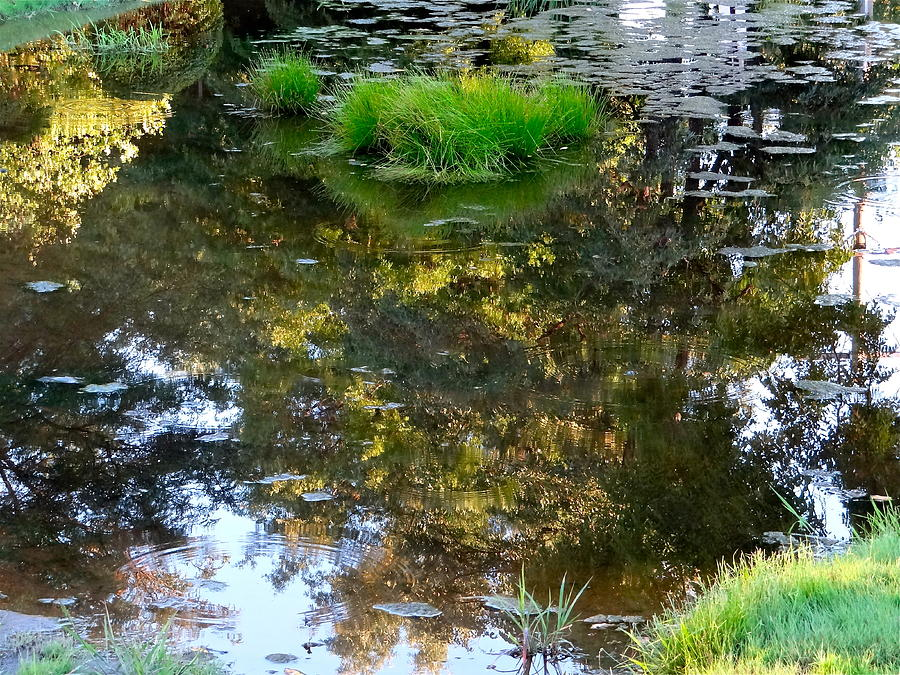 Walden Pond Photograph - A Quiet Little Pond by Ira Shander