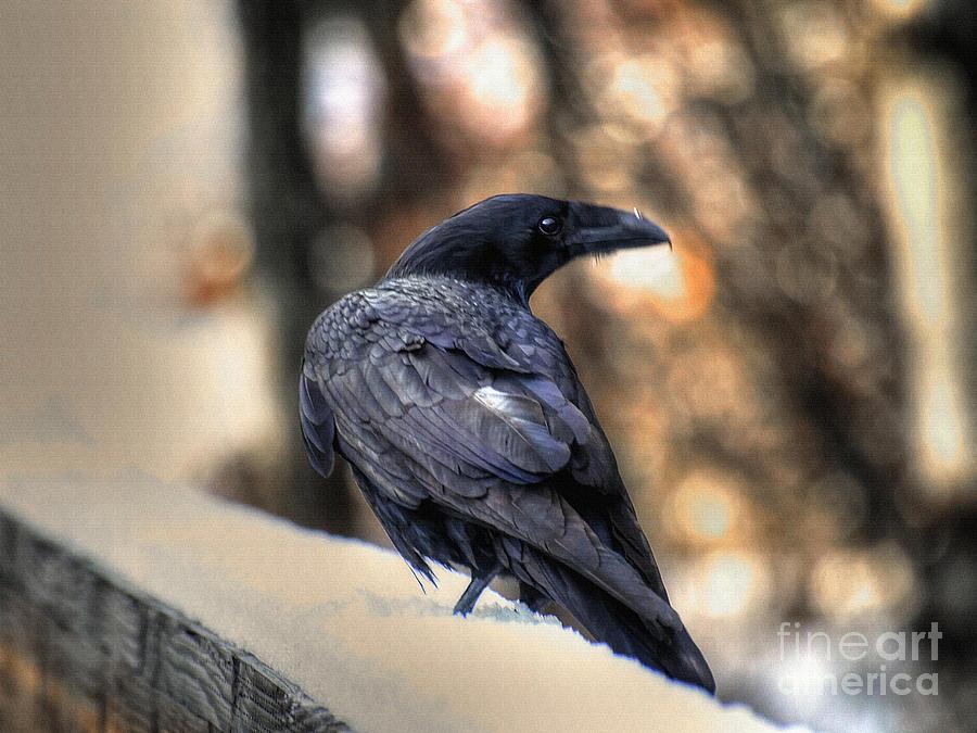 Raven Photograph - A Raven In Winter by Skye Ryan-Evans