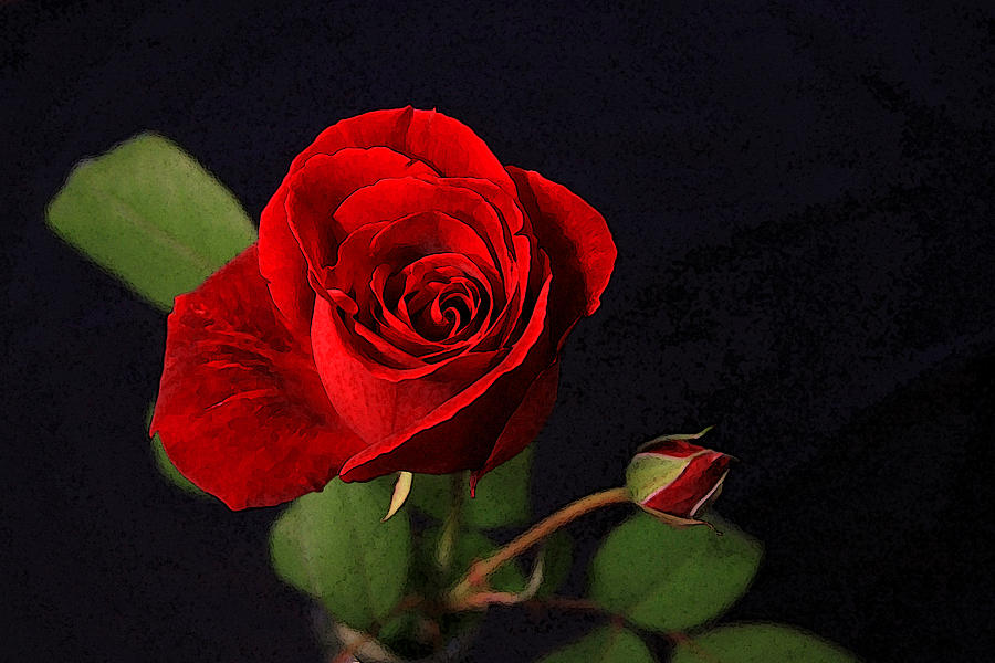 Rose Photograph - A Red Rose by CarolLMiller Photography