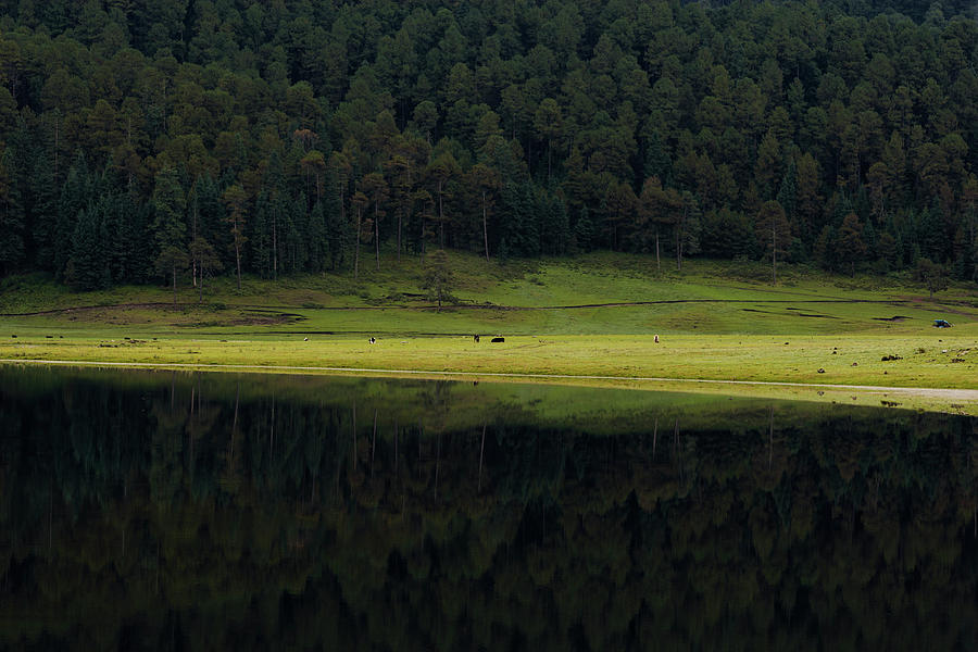 Agriculture Photograph - A Reflection Of The Trees In A Lake by Marcos Ferro