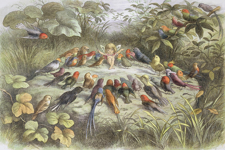 Bird Drawing - A Rehearsal In Fairy Land, Illustration by Richard Doyle