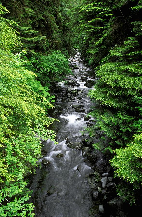 Brook Photograph - A River Runs Through It by Russ Bishop