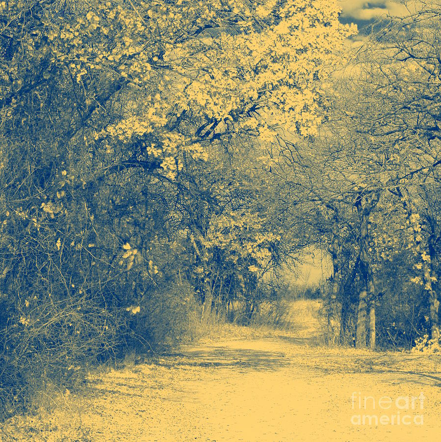 Landscape Photograph - A Road Framed With Trees by Mickey Harkins