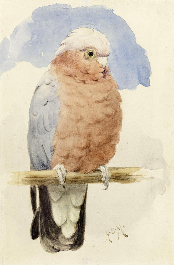 Cockatoo Painting - A Rose Breasted Cockatoo by Henry Stacey Marks