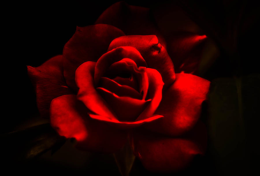 Beauty Photograph - A Rose By Any Other Name by J Riley Johnson