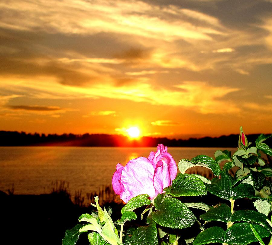 A Rosy Sunset In Maine Photograph