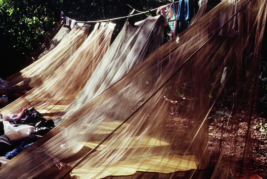 Clothesline Photograph - A Row Of Mosquito Netting Over Sleeping by Ron Koeberer