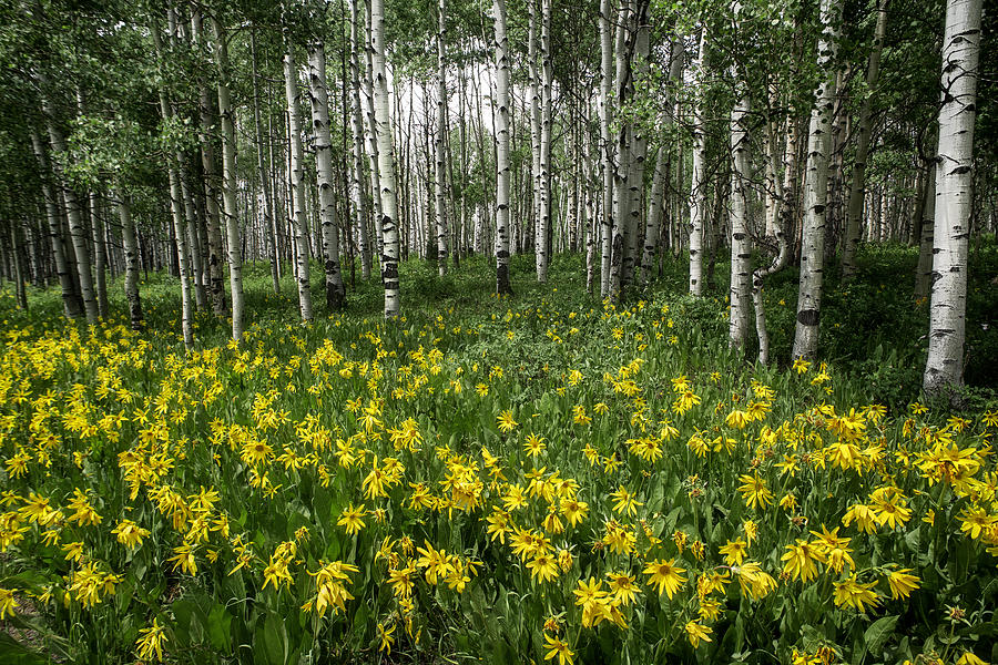 Wildflowers Photograph - A Secret Forest by Tim Reaves