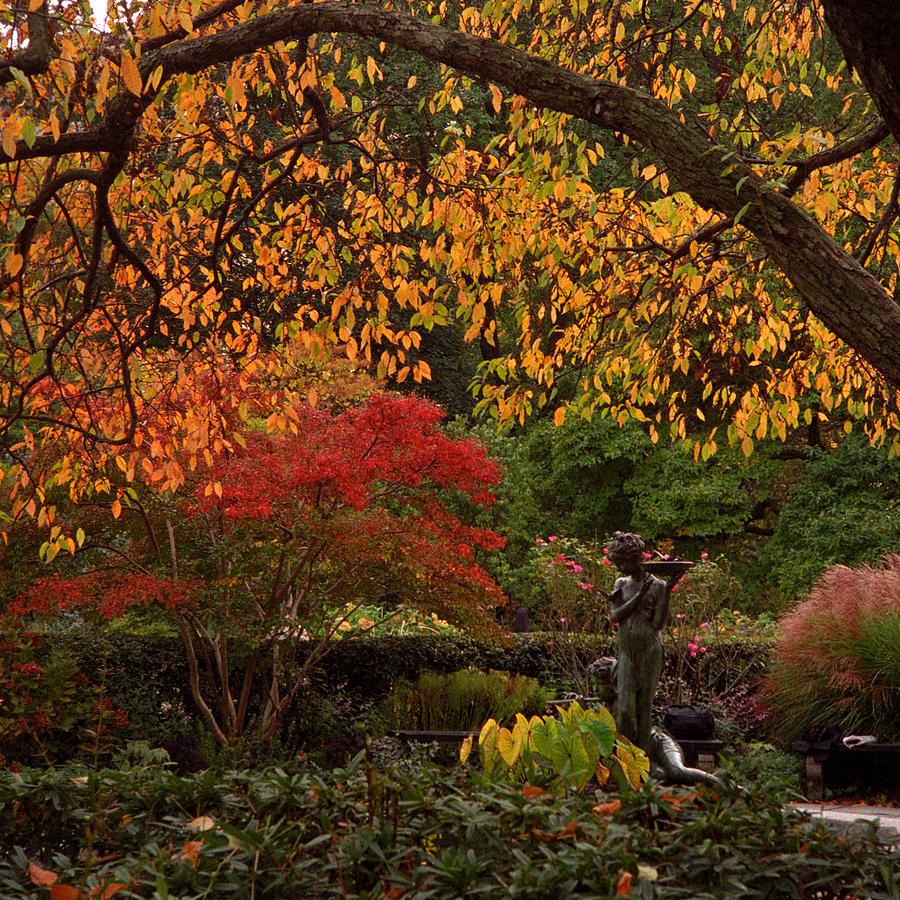 A Secret Garden Photograph by Cornelis Verwaal