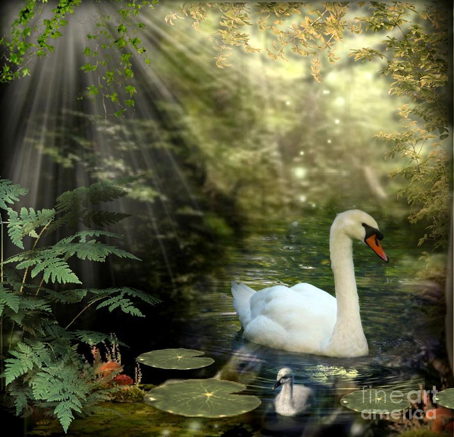 Swan Mixed Media - A Shady Brook by Morag Bates