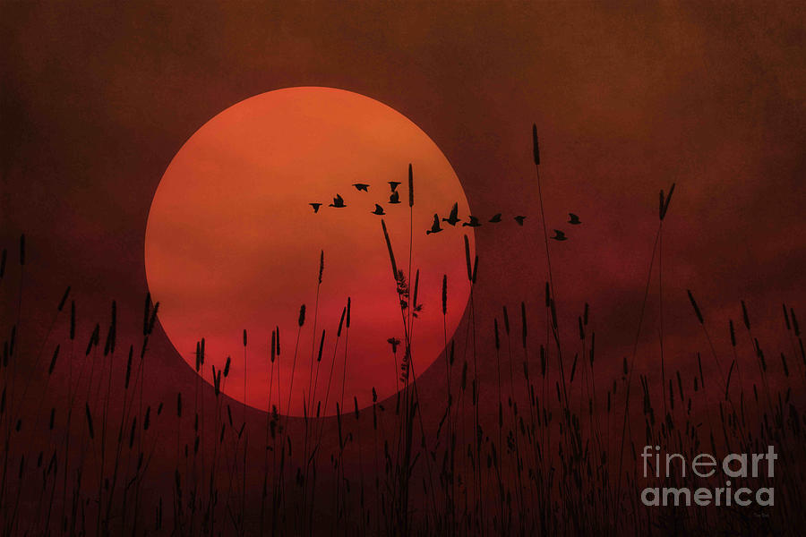 Orange Sunset Photograph - A Simple Sunset In June by Tom York Images