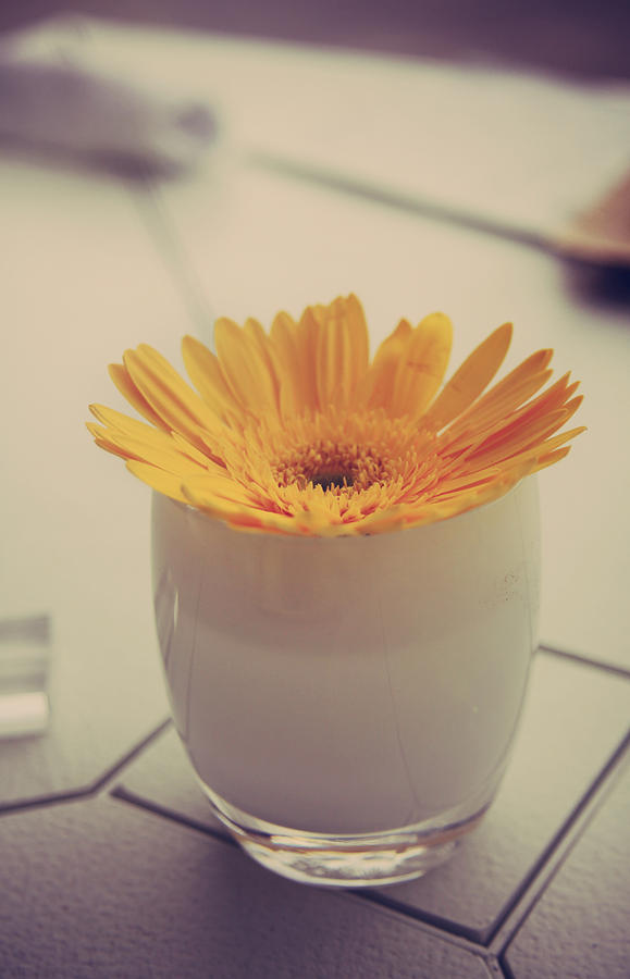 Flowers Photograph - A Simple Thing by Laurie Search