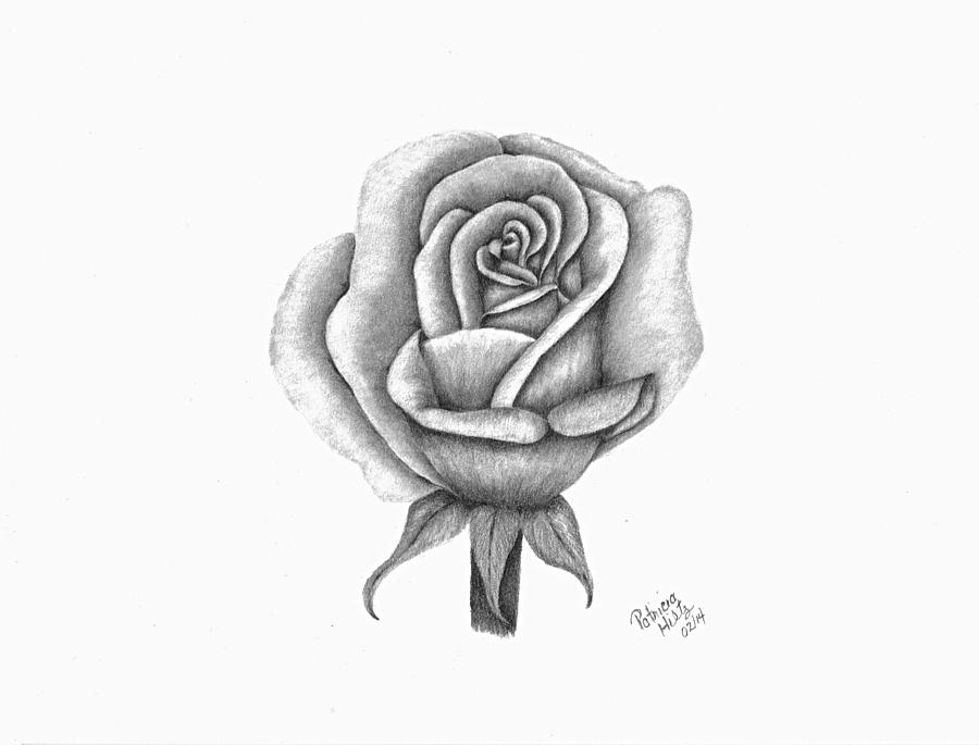 A single rose drawing by patricia hiltz for How to draw a black and white rose