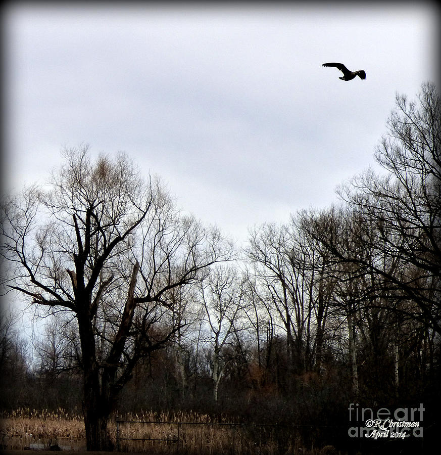 Landscape Photograph - A Single Soul by Rennae Christman