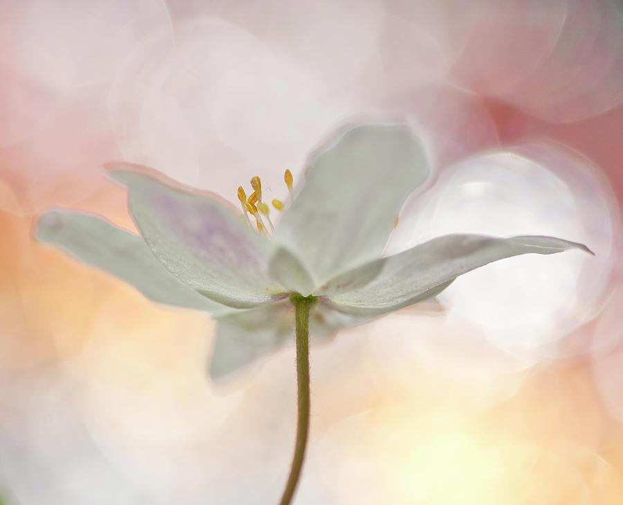 Bokeh Photograph - A Sip Of Art by Bee Thalin