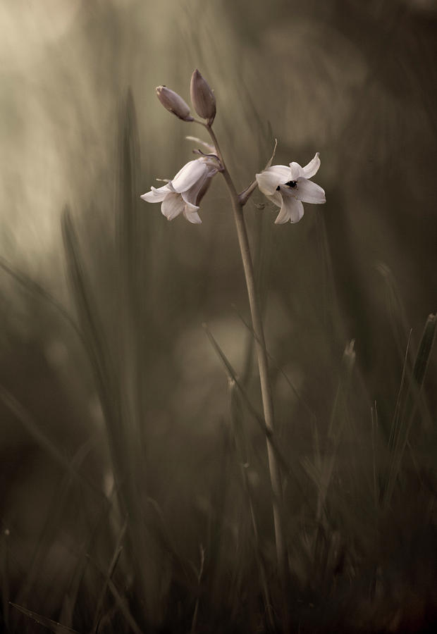 a-small-flower-on-the-ground-allan-wallberg Best Small Flower Photography Site Now @capturingmomentsphotography.net