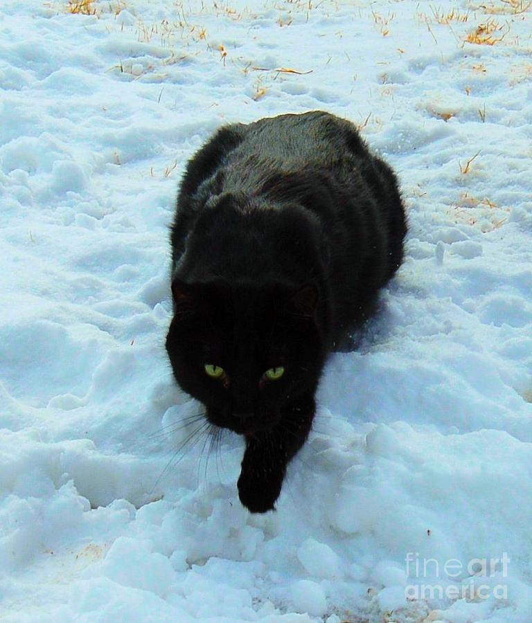 Cat Photograph - A Small Panther In The Snow by Cheryl Poland