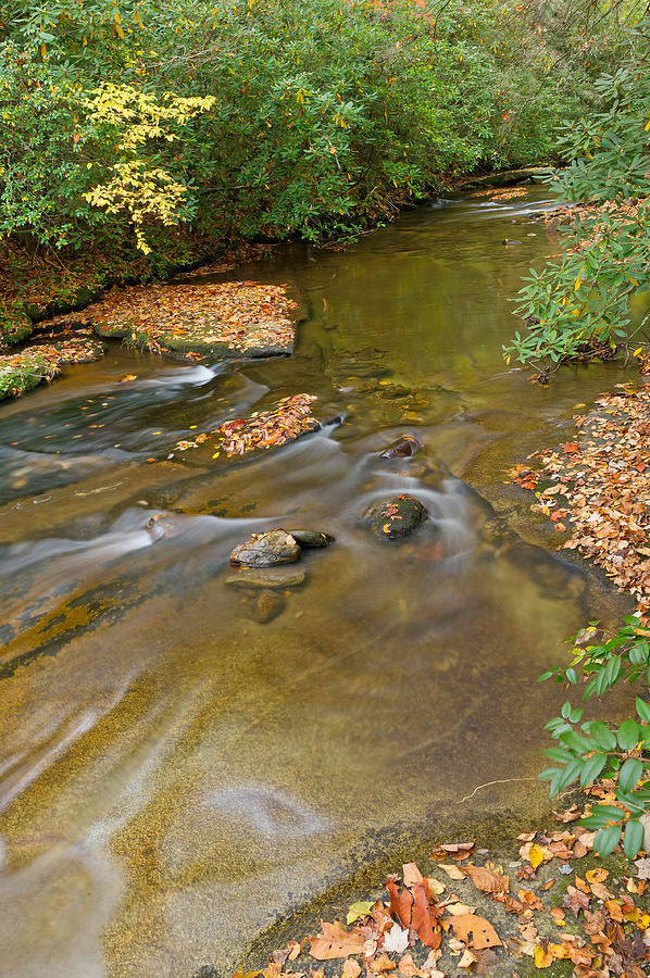 Brevard Photograph - A Small Stream In Pigah National Forest North Carolina by Willie Harper