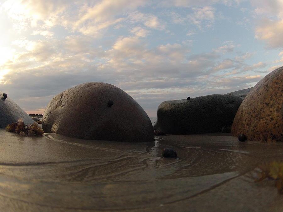 Snail Photograph - A Snails Tale by Eugene Bergeron