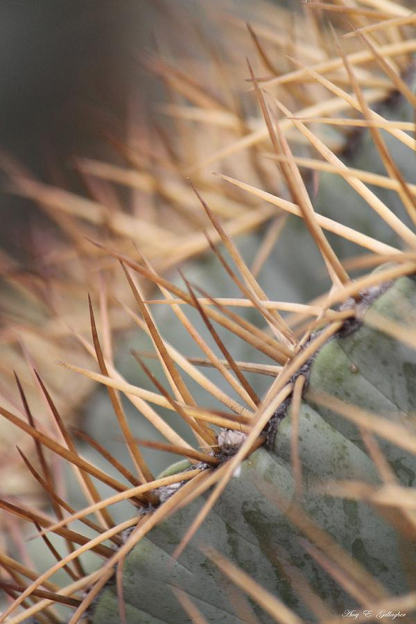 A Spiny Situation Photograph