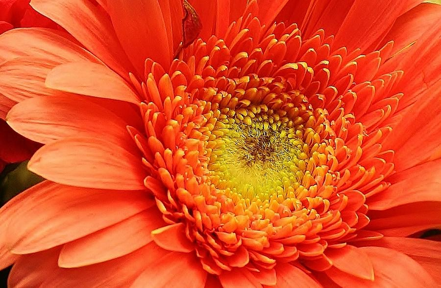 Flora Photograph - A Splash Of Happiness by Bruce Bley