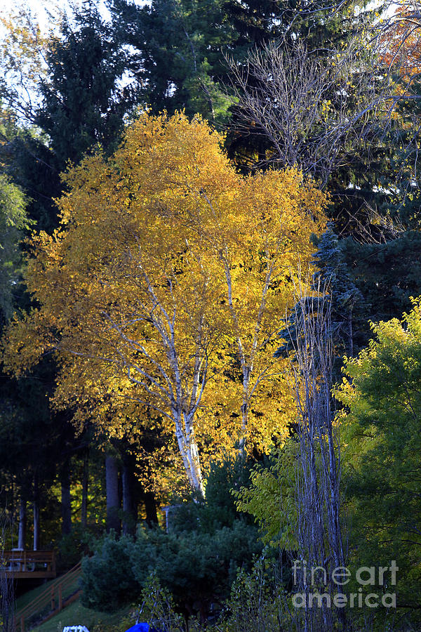 Fall Photograph - A Splash Of Yellow by Kathy DesJardins