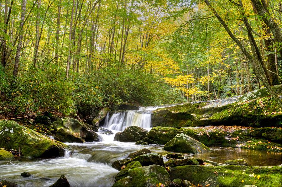 Autumn Photograph - A Splash of Yellow by Kristina Plaas
