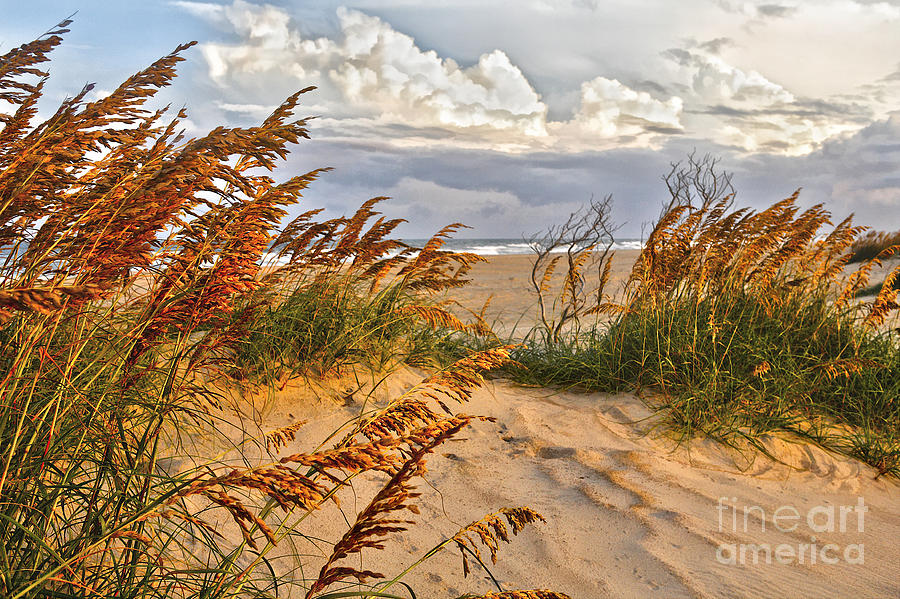 North Carolina Painting - A Splendid Day At The Beach - Outer Banks by Dan Carmichael