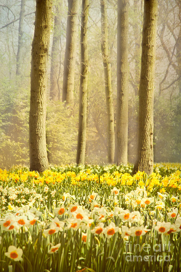 Forest Photograph - A Spring Day by Jasna Buncic