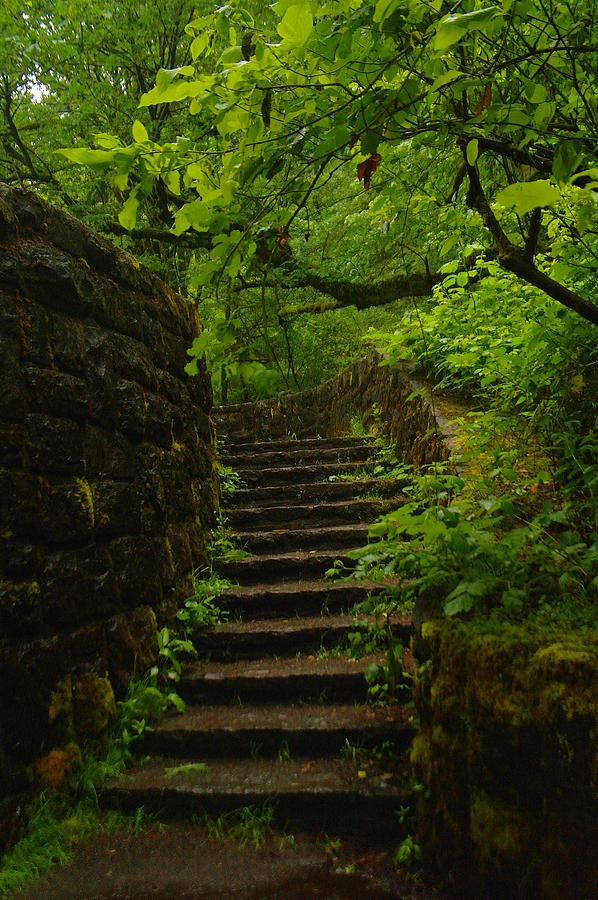 A Stairway To The Green Photograph