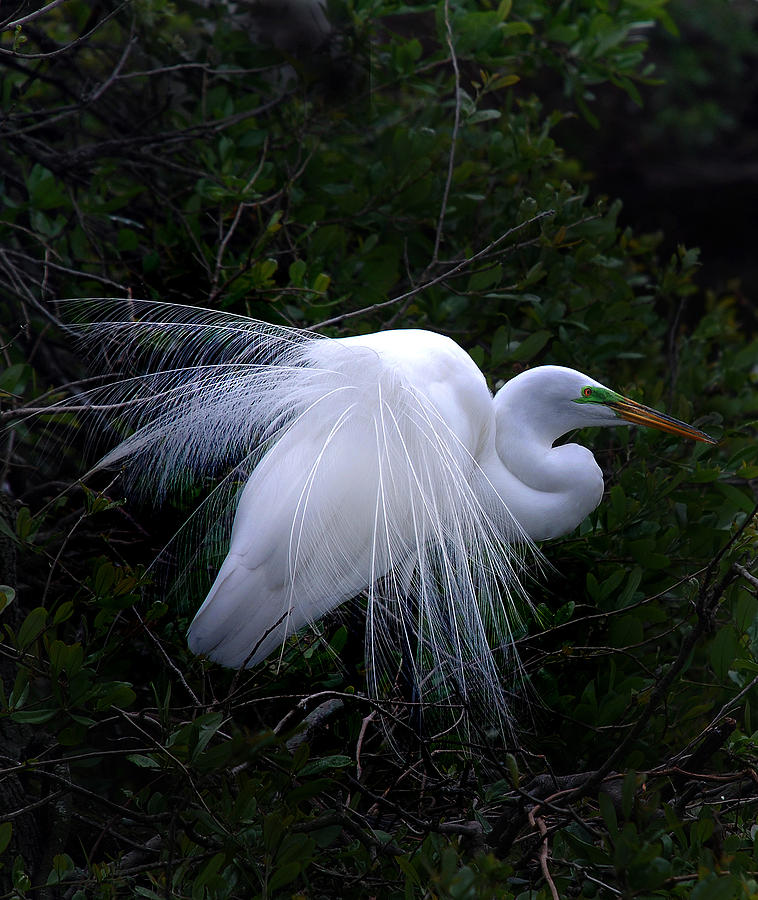 Egret Photograph - A Stand Out by Skip Willits