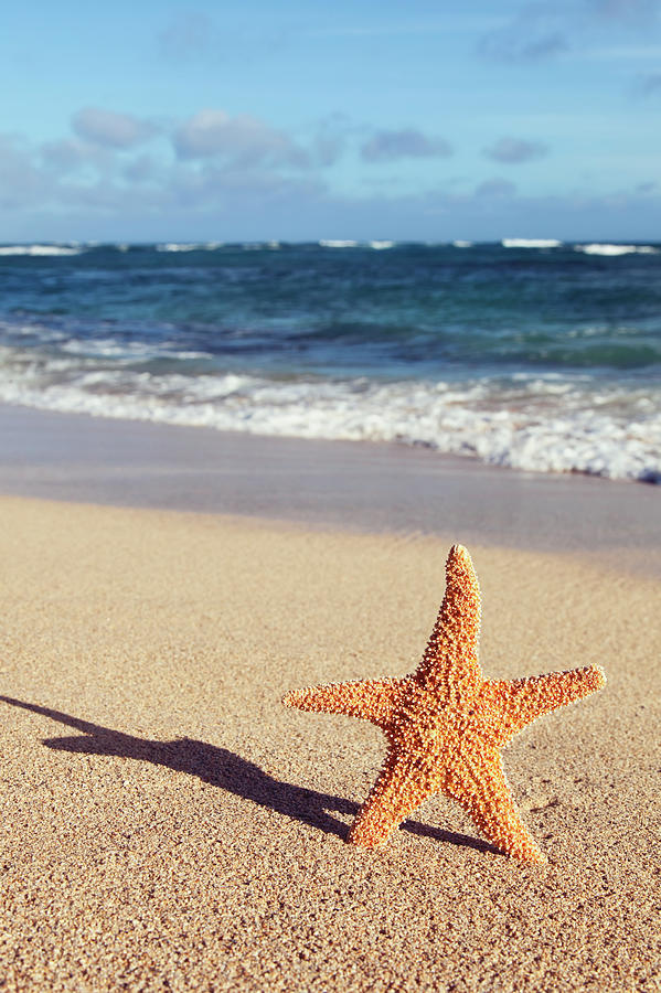 A Starfish Standing Up On The Beach Photograph by Brandon Tabiolo / Design Pics