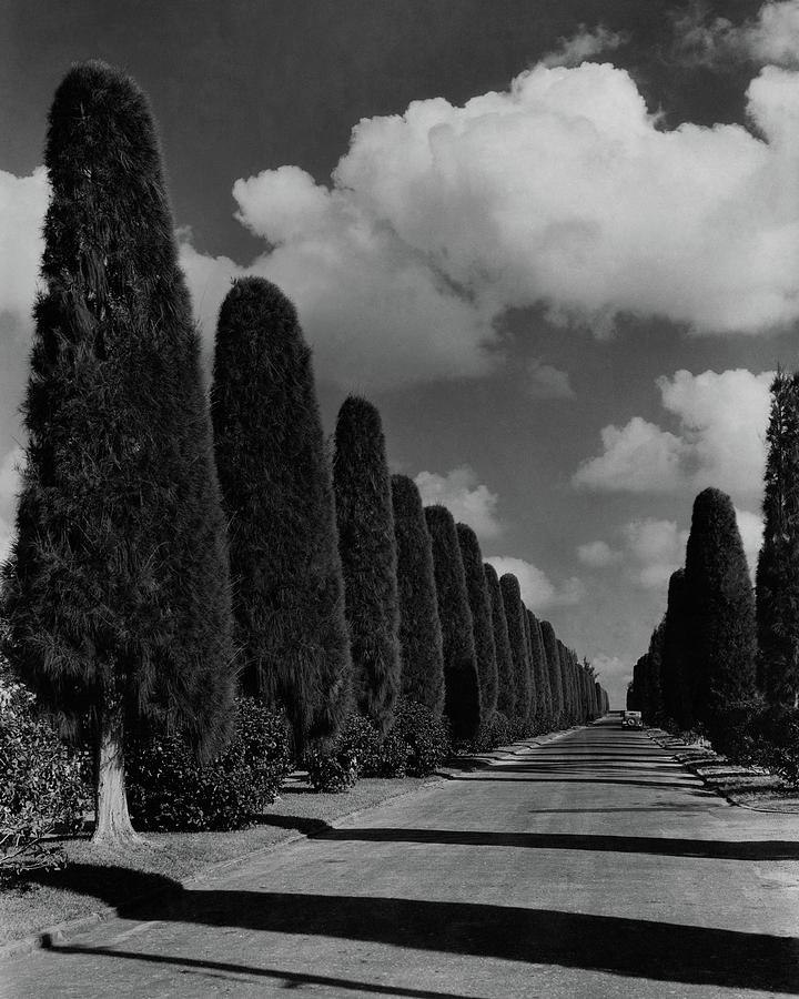 A Street Lined With Cypress Trees Photograph by John Kabel