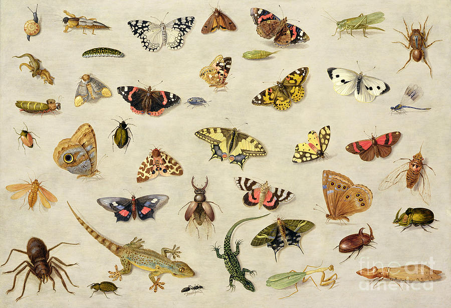 Collection Painting - A Study Of Insects by Jan Van Kessel