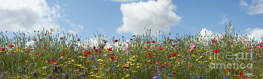 Wildflowers Photograph - A Summers Day by Tim Gainey