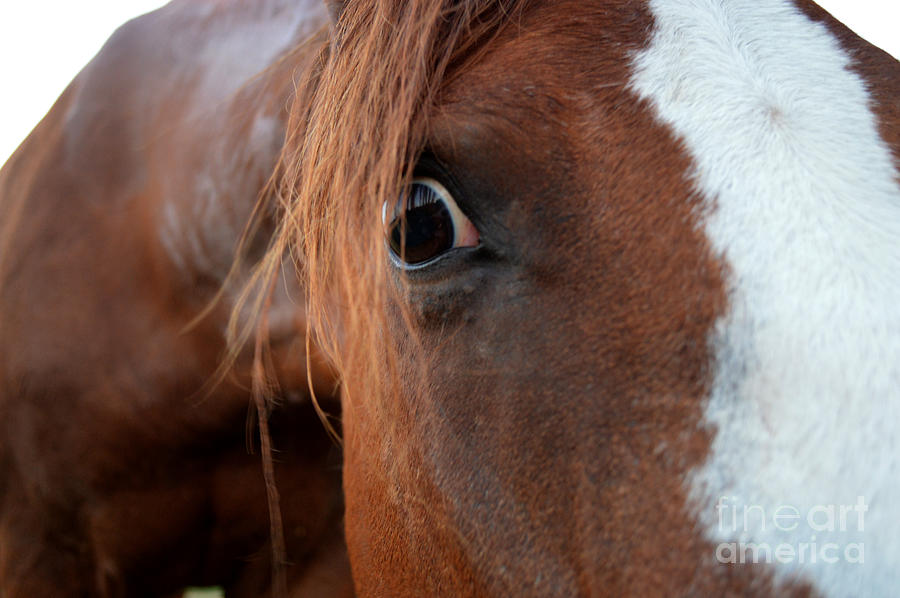 Horse Photograph - A Sweethearts Hello by Catherine Peterson