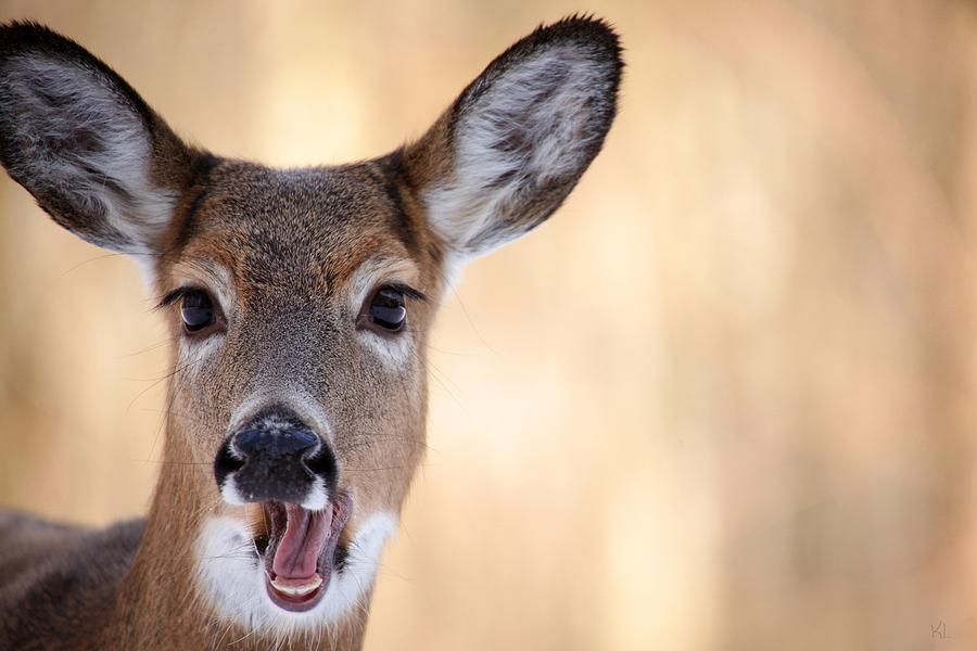 Deer Photograph - A Talking Deer by Karol Livote
