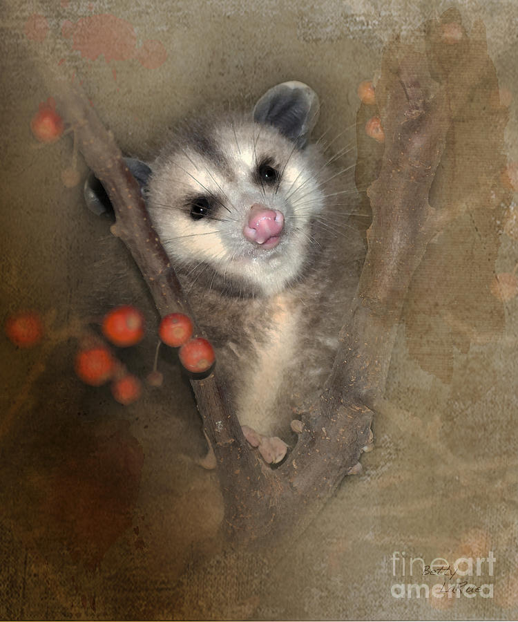 Opossum Photograph - A Thief In The Night by Betty LaRue
