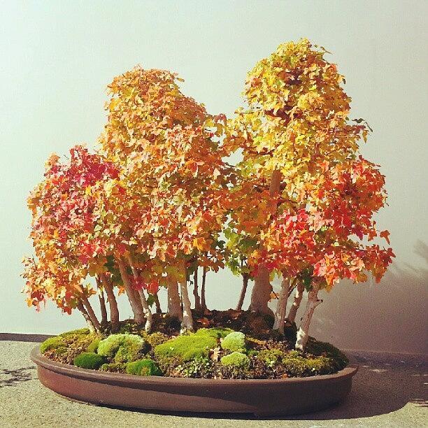 Bonsai Photograph - A Tiny Little Fall Bonsai Style by Jill Tuinier