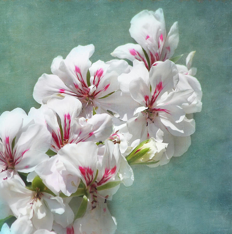 Flower Photograph - A Touch Of Class by Kim Hojnacki