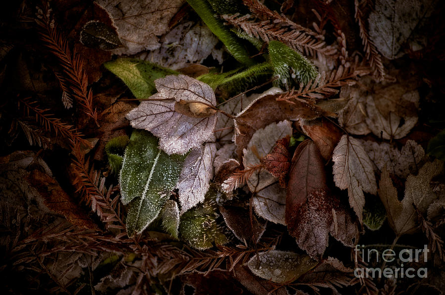 Botanical Photograph - A Touch Of Frost by Venetta Archer