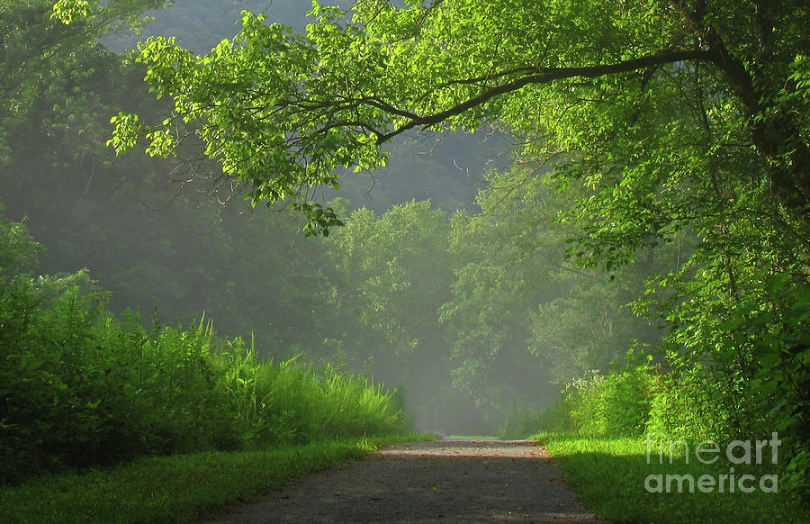 Trees Photograph - A Touch Of Green II by Douglas Stucky