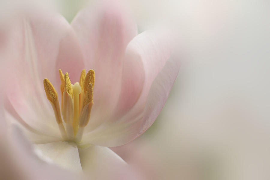 Floral Photograph - A Touch Of Pink by Annie Snel