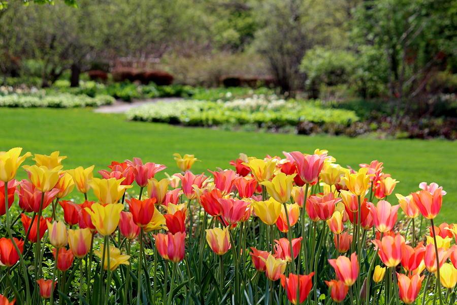 Garden Photograph - A Touch Of Spring by Rosanne Jordan