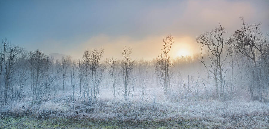 Frost Photograph - A Touch Of Winter by Burger Jochen