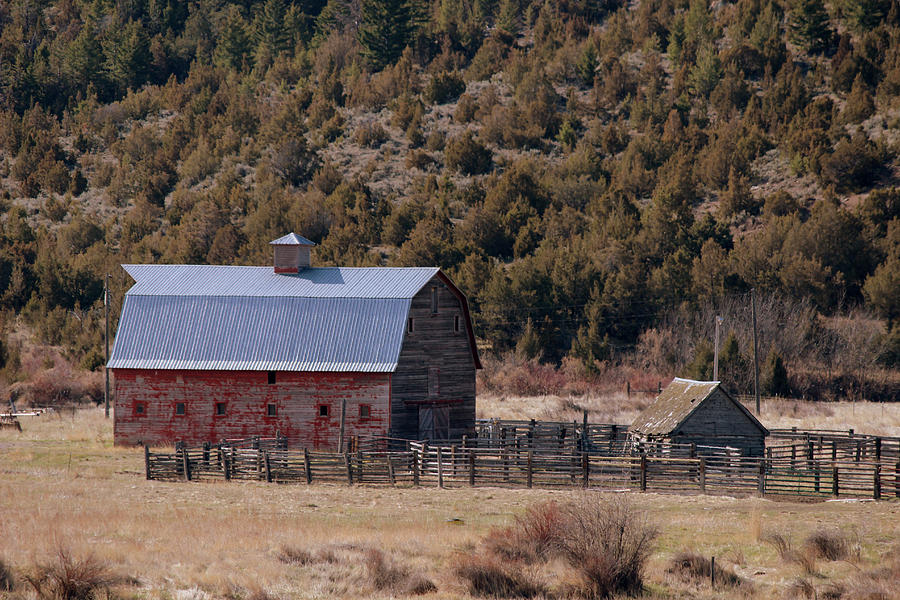 Barn Photograph - A Townsend Barn by Roxann Tempel