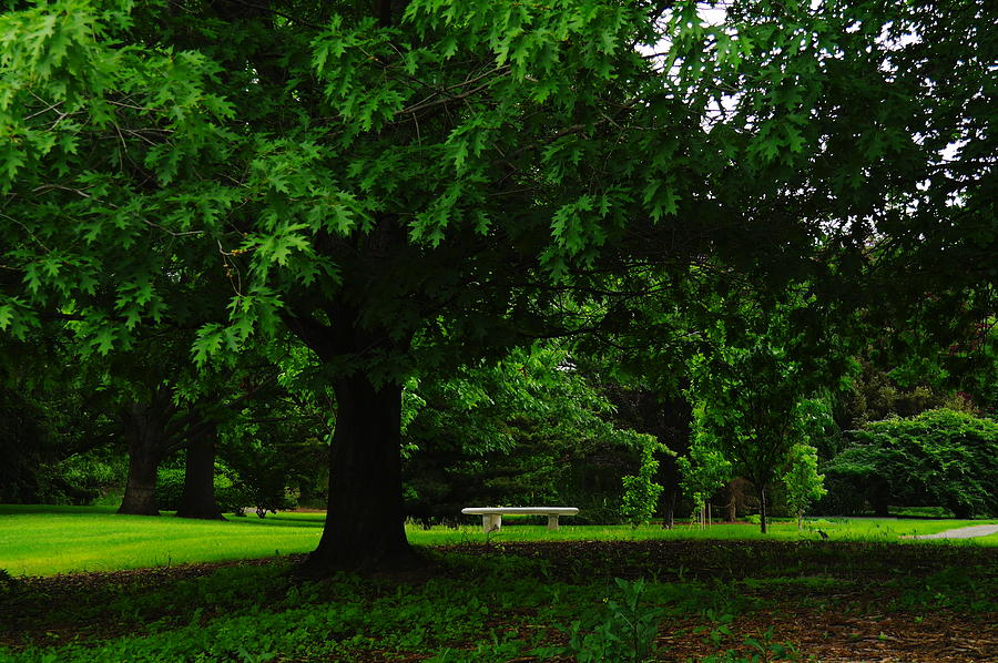 Green Photograph - A Tree And A Bench by Jeff Swan