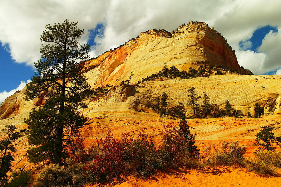 Landscape Photograph - A Tree And Orange Hill by Jeff Swan