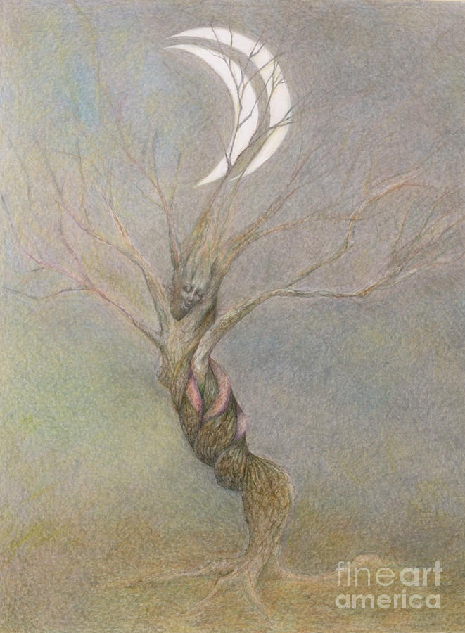 Tree Drawing - A Tree by Chiyuky Itoga